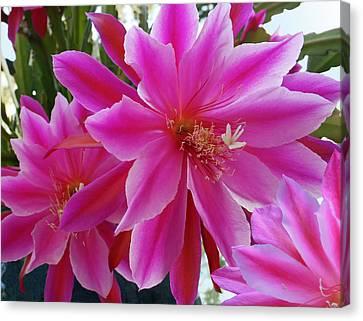 Epiphyllum Canvas Print