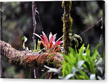Epiphytic Plants Canvas Print by Wes Hanson