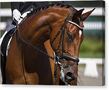 Canvas Print featuring the photograph Equestrian At Work D4913 by Wes and Dotty Weber