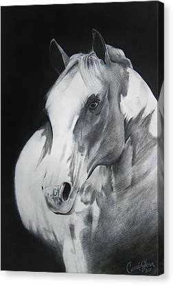 Equestrian Beauty Canvas Print by Carrie Jackson