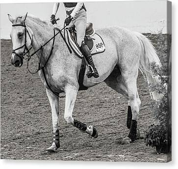 Braids Canvas Print - Equestrian The Attentive Gray by Betsy Knapp