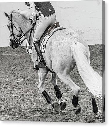 Braids Canvas Print - Equestrian The Working Gray by Betsy Knapp