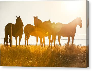 Chestnut Horse Canvas Print - Equine Glow by Todd Klassy