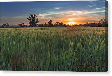 Equinox-first Sunrise Of Spring Canvas Print by Tim Bryan
