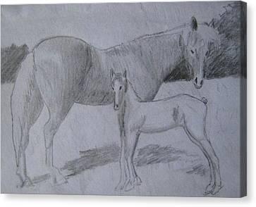 Equus Caballus Canvas Print by SAIGON De Manila