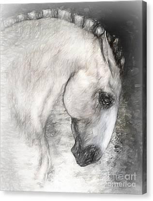 Equus Canvas Print by Shanina Conway