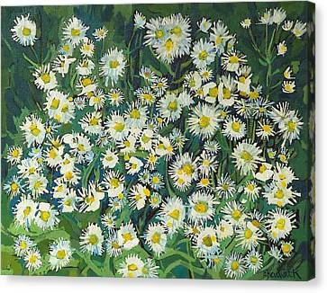 Erigeron Canvas Print by Phil Chadwick