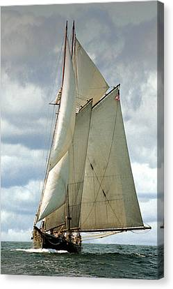 Ernestina Canvas Print by Fred LeBlanc