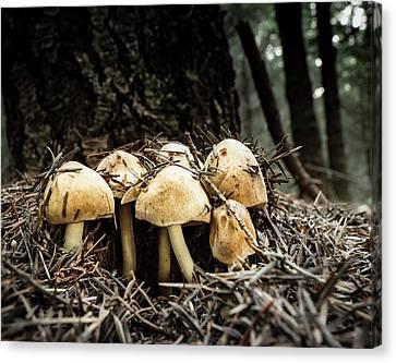 Canvas Print - Erupting Mushrooms by Jean Noren