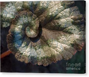 Escargot Begonia Canvas Print