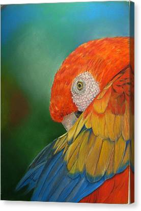 Canvas Print featuring the painting Escondida by Ceci Watson