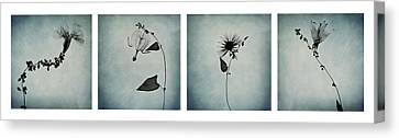 Essence Of Flowers Canvas Print