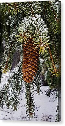 Essence Of Winter  Canvas Print