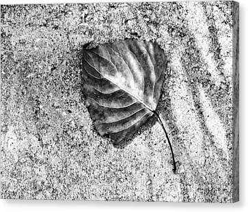 Essential ...black And White Canvas Print by Tom Druin
