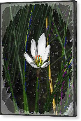 Estuary Elegance Canvas Print by Tim Allen