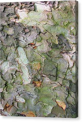 Bark Design Canvas Print - Etched In Bark by Jessica Jenney