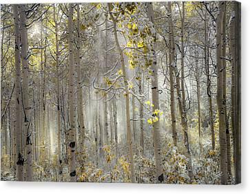 Ethereal Autumn Canvas Print by Leland D Howard