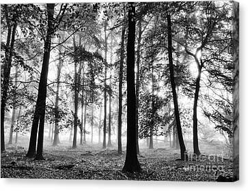 Ethereal Beech Wood Canvas Print by Tim Gainey
