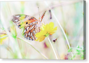 Canvas Print featuring the photograph Ethereal Butterfly by Andrea Anderegg