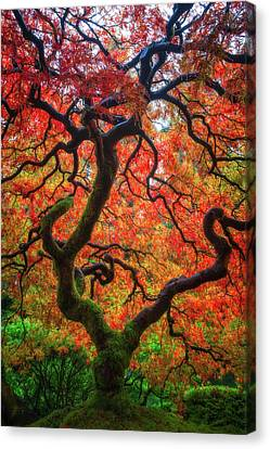 Canvas Print featuring the photograph Ethereal Tree Alive by Darren White