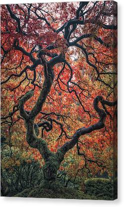 Ethereal Tree Canvas Print by Darren White