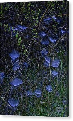 Canvas Print featuring the photograph Ethereal Webs by Sherri Meyer