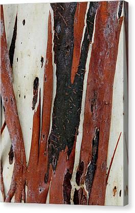 Eucalyptus Bark Abstract 2 Canvas Print