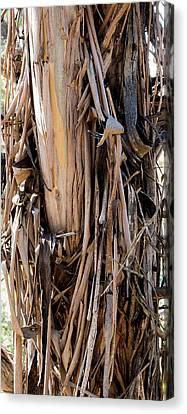 Eucalyptus Bark - Australia Canvas Print by Steven Ralser