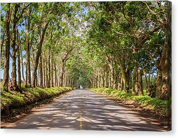 Street Lights Canvas Print - Eucalyptus Tree Tunnel - Kauai Hawaii by Brian Harig