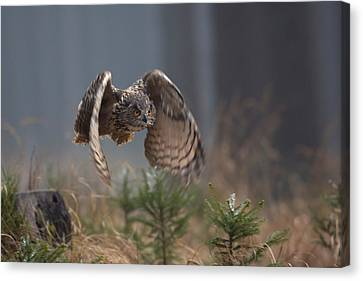 Eurasian Eagle-owl Canvas Print by Milan Zygmunt