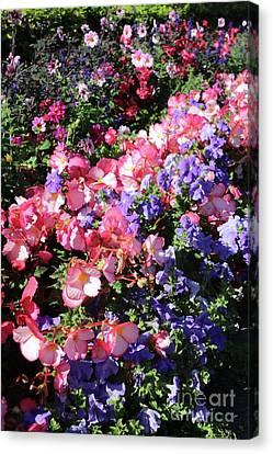 Blue Begonia Canvas Print - European City Garden by Carol Groenen