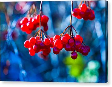 Canvas Print featuring the photograph European Cranberry Berries by Alexander Senin