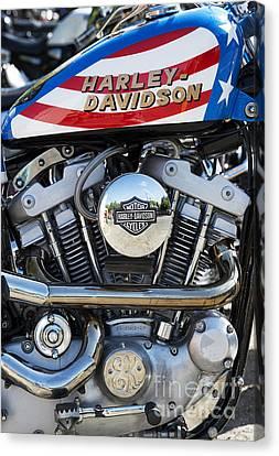 Evel Harley Davidson Canvas Print by Tim Gainey