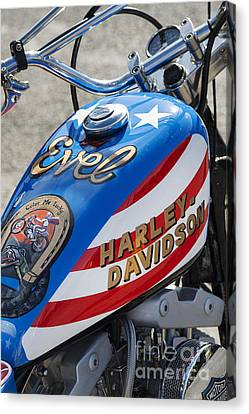 Evel Harley  Canvas Print by Tim Gainey