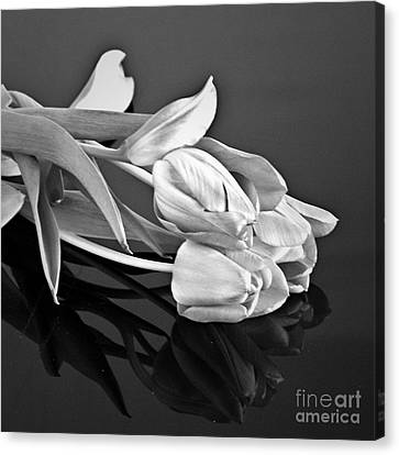 Even Tulips Are Beautiful In Black And White Canvas Print by Sherry Hallemeier