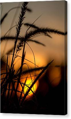 Evening Arrives Canvas Print by Andrea Kappler