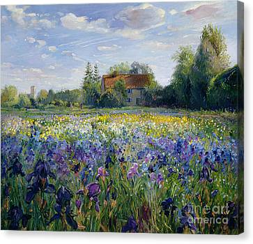 Country Cottage Canvas Print - Evening At The Iris Field by Timothy Easton