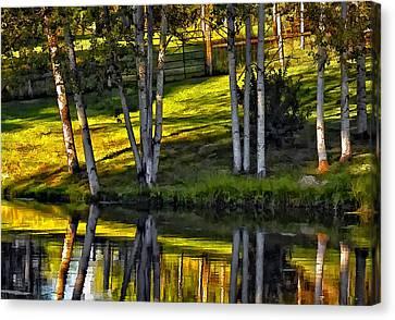 Evening Birches Canvas Print by Steve Harrington