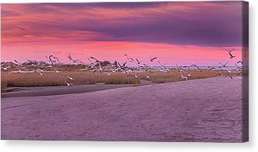 Evening Dance Canvas Print by Betsy Knapp
