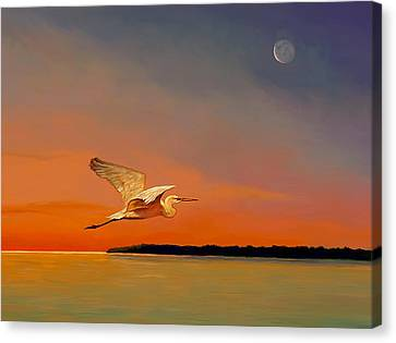 Evening Flight Canvas Print by David  Van Hulst