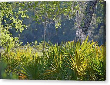 Canvas Print featuring the photograph Evening Foliage by Bruce Gourley