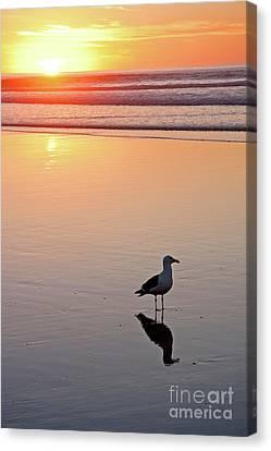 Evening Glow At La Jolla Shores Beach Canvas Print