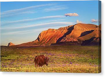 Tracy Munson Canvas Print - Evening Graze by Tracy Munson