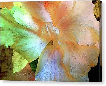 Canvas Print - Evening Hibiscus Digital Watercolor by James Temple