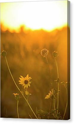 Evening In Eden Canvas Print