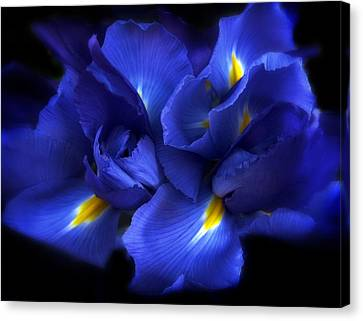 Evening Iris Canvas Print by Jessica Jenney