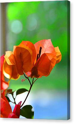 Tangerines Canvas Print - Evening Light by Jan Amiss Photography
