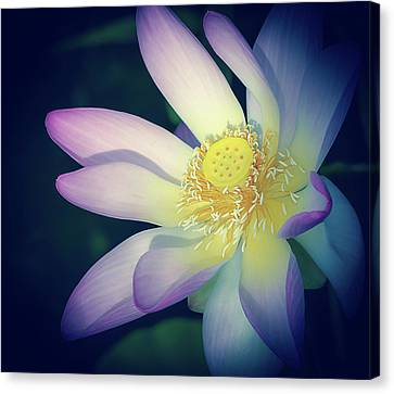 Canvas Print featuring the photograph Evening Lotus  by Julie Palencia