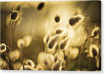 Warm Summer Canvas Print - Evening by Nailia Schwarz