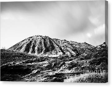 Evening On Koko Crater Canvas Print by Charmian Vistaunet